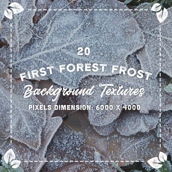 20 First Forest Frost Backgrounds