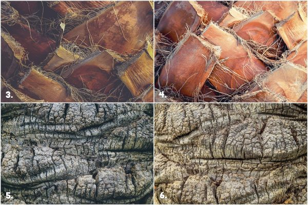 29 Palm Bark Textures & Backgrounds