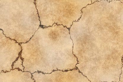 Skull Bone Background Textures