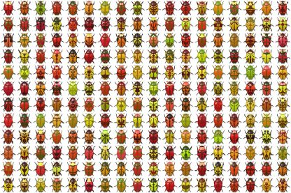 10 Beetle Collection Backgrounds Preview Set