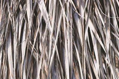 11 Palm Leaves Textures