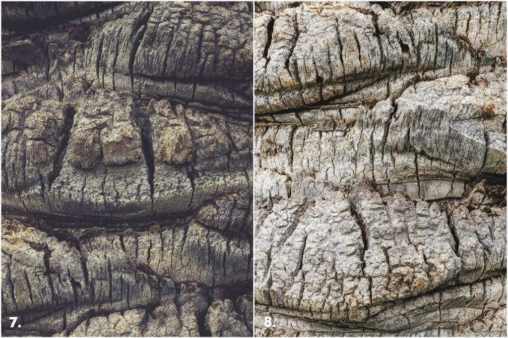 29 Palm Bark Textures & Backgrounds