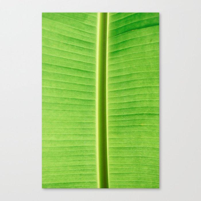Big Banana Palm Leaf Canvas Print