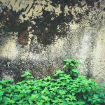 Rocky stone wall with moss and green plants texture