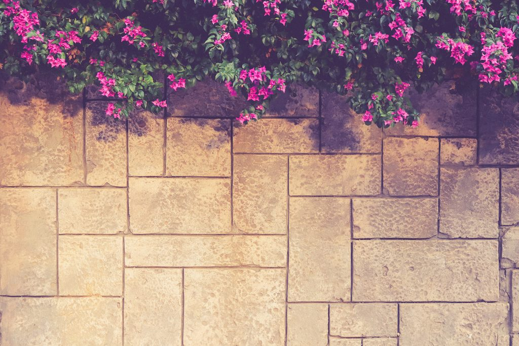 Masonry stucco wall texture with overhanging flowers bush. Exterior architecture background.