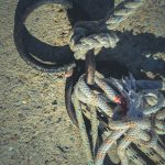 Iron mooring rings. Concrete pier surface. Lots of rope knots leading to moored boats.