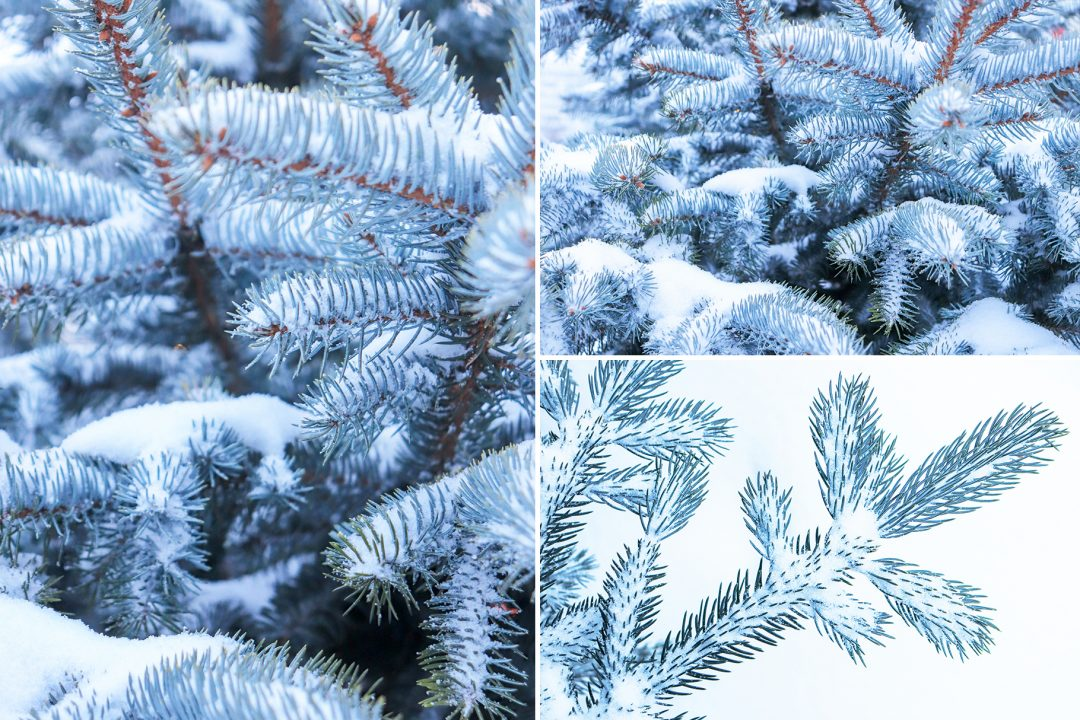 Christmas Tree Backgrounds.13 Blue Christmas Tree Backgrounds Textures World
