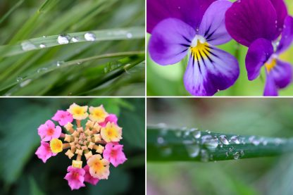 50 Floral Macro Backgrounds Preview Slide